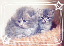 猫画像の画像(プリ画像)