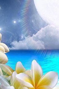 壁紙*太陽とプルメリアの画像(プリ画像)