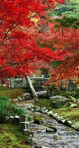 壁紙*京都の紅葉