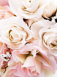 淡いピンクと白い薔薇の画像(プリ画像)