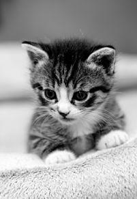壁紙*子猫の画像(プリ画像)