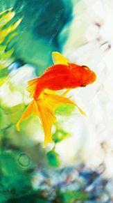 金魚の気持ちの画像(プリ画像)