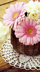 ガーベラの花の画像(プリ画像)