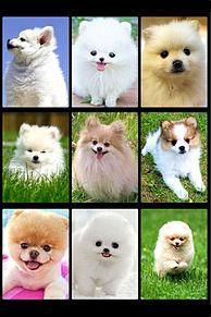かわいい子犬の画像(プリ画像)