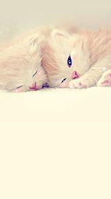可愛い子猫の画像(プリ画像)