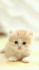 みつめる子猫の画像(プリ画像)