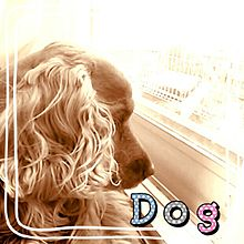遠くを見つめる犬☆の画像(スパニエルに関連した画像)