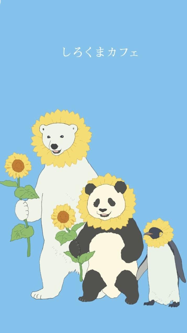 しろくまカフェの仲良し3人が向日葵になる壁紙