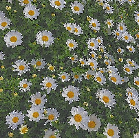 Flower    保存は ♡の画像(プリ画像)
