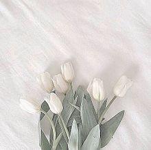 tulip  保存は「♡」の画像(シンプル/暗いに関連した画像)
