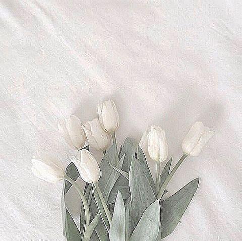 tulip  保存は「♡」の画像(プリ画像)