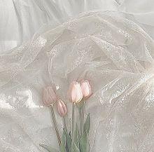 - ̗̀ tulip  ̖́-   保存は ♡の画像(シンプル/暗いに関連した画像)