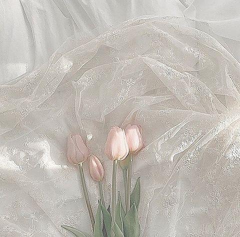 - ̗̀ tulip  ̖́-   保存は ♡の画像 プリ画像