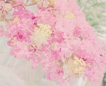 金平糖を咲かせた木の画像(恋に効くに関連した画像)