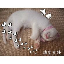 猫型天使 プリ画像