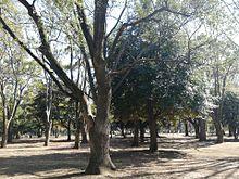 代々木公園✨の画像(代々木公園に関連した画像)