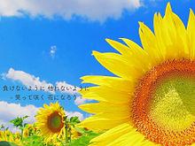 Mr.Children/花の画像(Mr.Childrenに関連した画像)