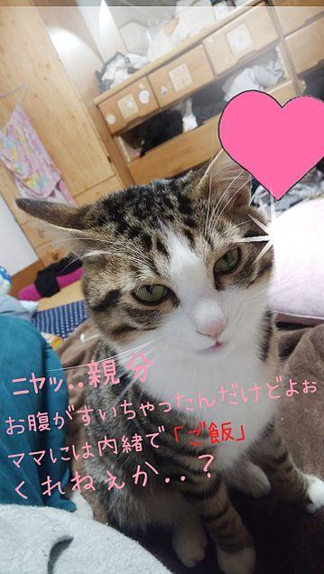 家の猫ちゃんの企み wの画像(プリ画像)