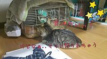 家の猫ちゃん プリ画像