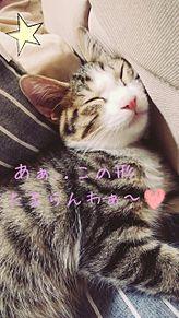 家の猫ちゃんﻌﻌﻌ♥ プリ画像