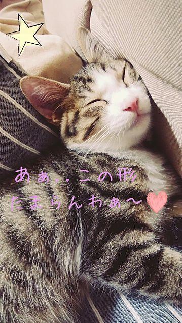 家の猫ちゃんﻌﻌﻌ♥の画像(プリ画像)