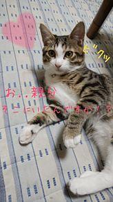 家の猫の企み w プリ画像