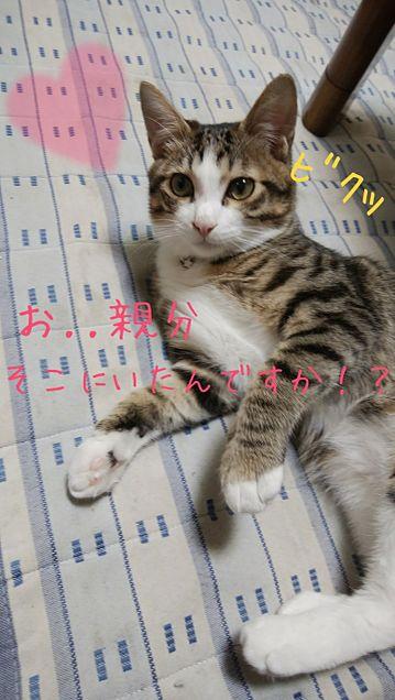 家の猫の企み wの画像(プリ画像)