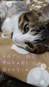 猫の寝る前の言葉 w プリ画像