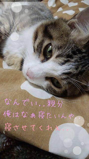 猫の寝る前の言葉 wの画像(プリ画像)
