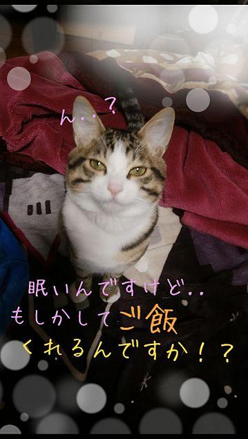 家の猫ちゃんの画像(プリ画像)