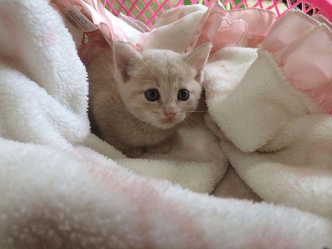 愛猫の画像(プリ画像)