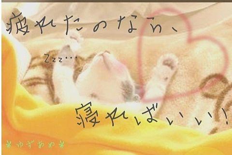 ポエム、猫、動物、かわいいの画像 プリ画像