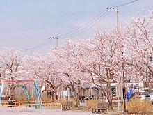 桜の画像(springに関連した画像)
