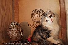 フクロウとネコの画像(プリ画像)