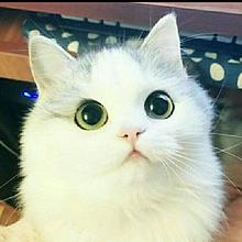 友達の猫♡♡超可愛い😆の画像(超可愛いに関連した画像)