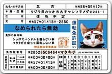 なめ猫 免許証の画像(猫に関連した画像)