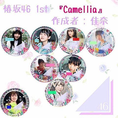 椿坂46  ファーストシングル  Camelliaの画像(プリ画像)