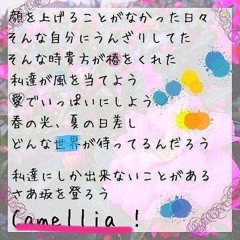 椿坂46 1st シングル 「Camellia」歌詞の画像(プリ画像)