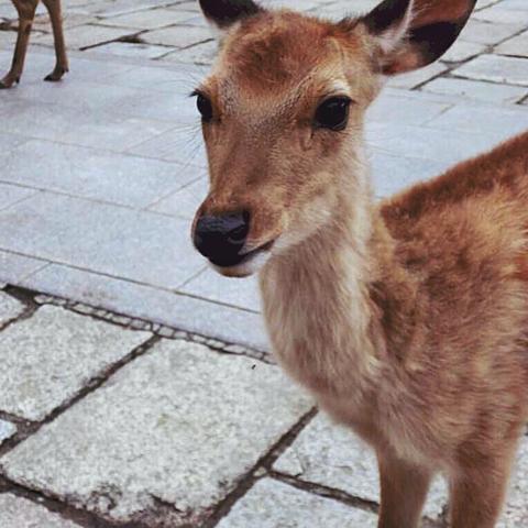 鹿の画像(プリ画像)