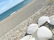 海/貝殻の画像(貝殻に関連した画像)