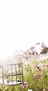 Bird cageの画像(プリ画像)