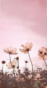 壁紙 花 ピンクの画像1120点 46ページ目 完全無料画像検索のプリ
