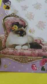 シャム猫ー(*>∀<*)の画像(猫 おしゃれに関連した画像)