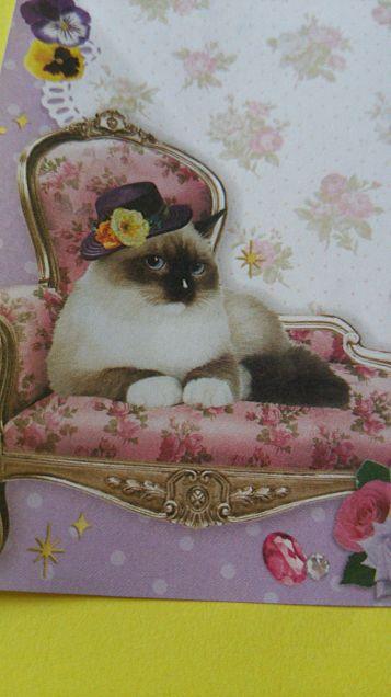 シャム猫ー(*>∀<*)の画像 プリ画像