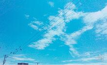 今日の空と鳥の画像(プリ画像)