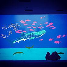 ハトくんと水族館の画像(水 おしゃれに関連した画像)