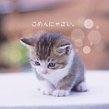 猫ちゃんฅ•ω•ฅの画像(プリ画像)