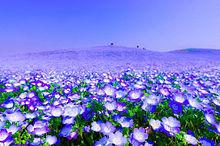 花畑の画像(花畑に関連した画像)