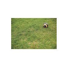 soccerの画像(大津祐樹に関連した画像)
