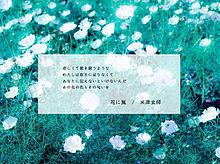 花に嵐の画像(プリ画像)